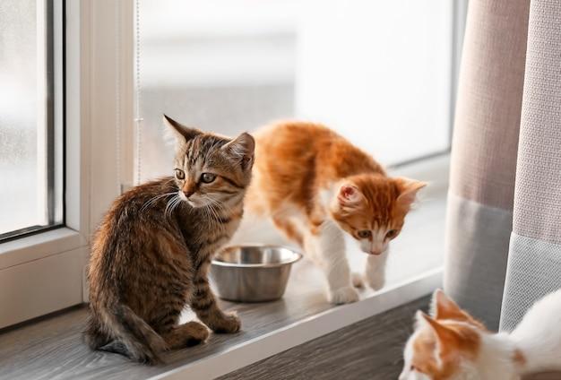 Śliczne małe kocięta w pobliżu okna