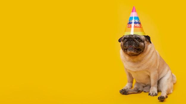 Śliczne małe psy świętujące urodziny