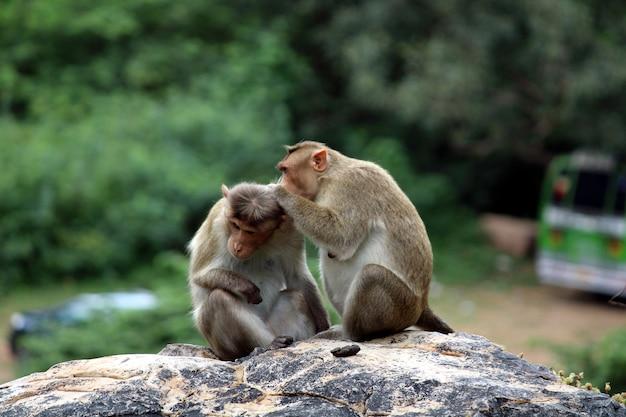 Śliczne małpy z rodziną zbliżenie małpy małpy żyjące na wolności