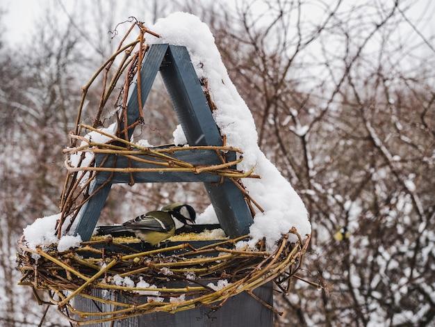 Śliczne, piękne ptaki w wiklinowym koszyczku.