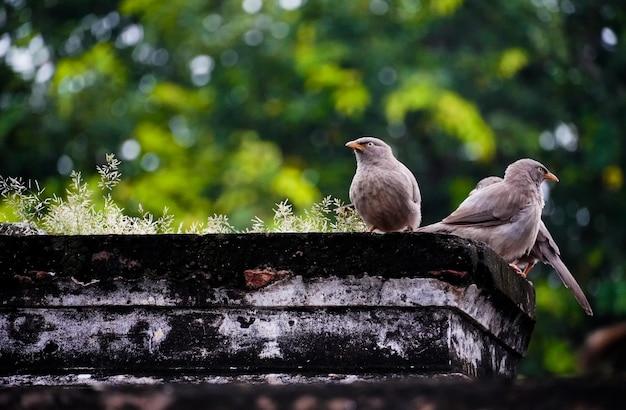 Śliczne ptaki na drzewie podczas sesji plenerowej