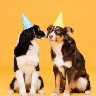 Śliczne siedzące psy z czapkami