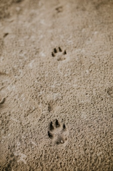Śliczne ślady psa na piasku na plaży