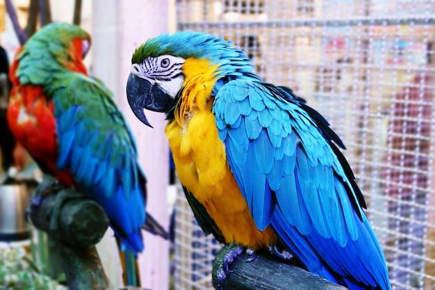 Śliczne śmieszne papugi stoją w sklepie zoologicznym