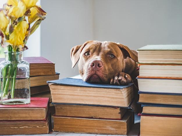 Śliczne szczeniak i zabytkowe książki. zdjęcie studyjne