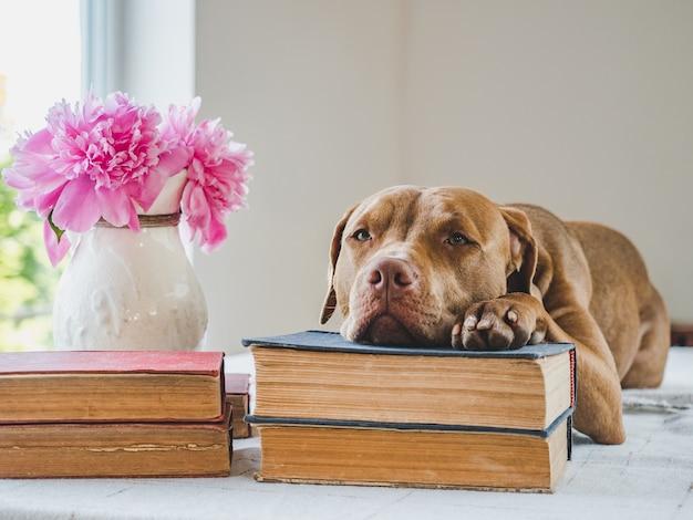 Śliczne, urocze szczeniaki i zabytkowe książki. zbliżenie, na białym tle. koncepcja opieki, edukacji, treningu posłuszeństwa i wychowania zwierząt