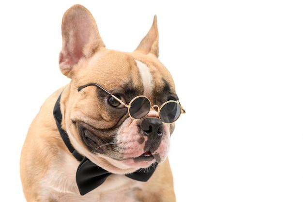 Śliczni brown francuskiego buldoga odzieży okulary przeciwsłoneczni i czarny muszka odizolowywający