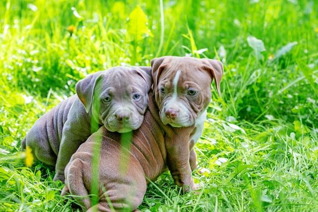 Śliczni mali psy siedzi wśród żółtych kwiatów w zielonej trawie w parku. na dworze. tapeta.
