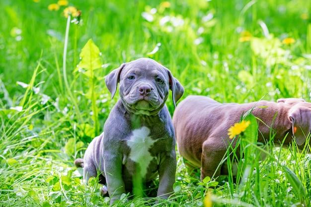 Śliczni mali psy siedzi wśród żółtych kwiatów w zielonej trawie w parku.