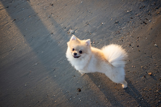 Śliczny bezpański pies na piasku