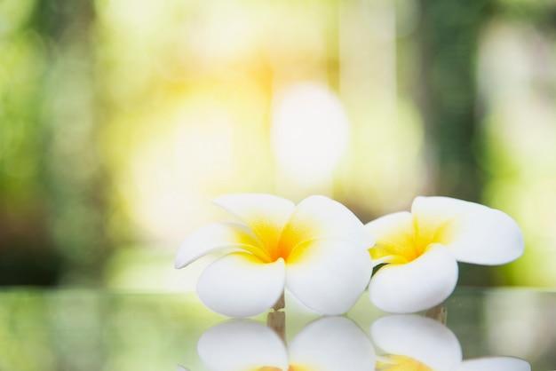 Śliczny biały kwiat w zamazanym tle