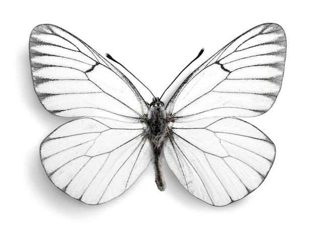 Śliczny biały motyl na tle