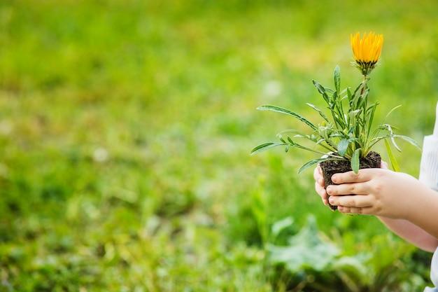 Śliczny blond chłopiec mienia kwiat ziemia w wiosna ogródzie