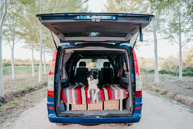 Śliczny border collie pies relaksuje w samochodzie dostawczym. koncepcja podróży