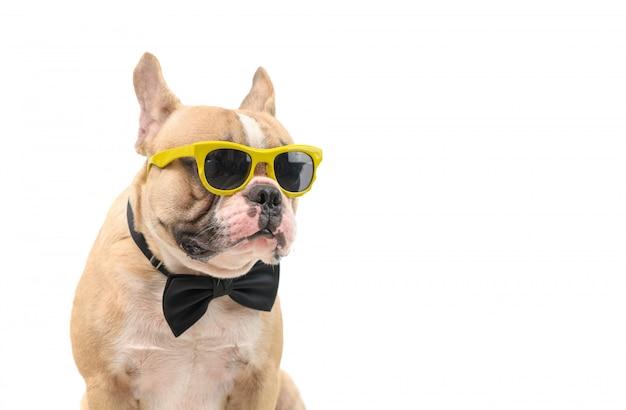 Śliczny brązowy buldog francuski nosi okulary przeciwsłoneczne i czarną muszkę