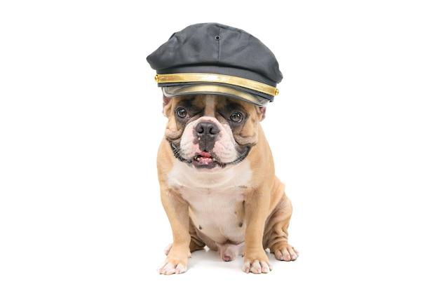 Śliczny buldog francuski nosi czapkę policyjną na białym tle, zwierzęta domowe i koncepcję zwierząt