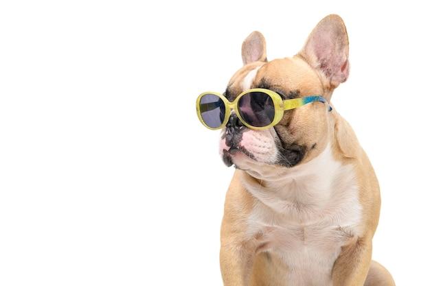 Śliczny buldog francuski nosi modne okulary przeciwsłoneczne na białym tle, zwierzęta domowe i zwierzę na koncepcji lata
