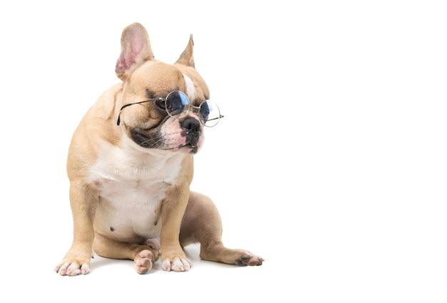Śliczny buldog francuski nosi okulary siedzące na białym tle, koncepcja zwierząt domowych i zwierząt