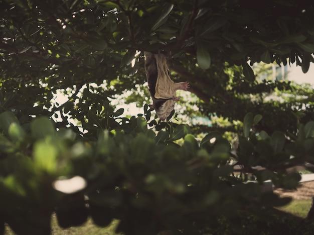 Śliczny cukrowy szybowiec bawić się na drzewie