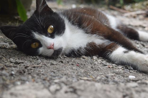 Śliczny czarny kociak śpi na ulicy