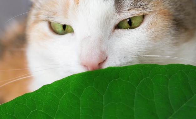 Śliczny domowy kot je houseplant