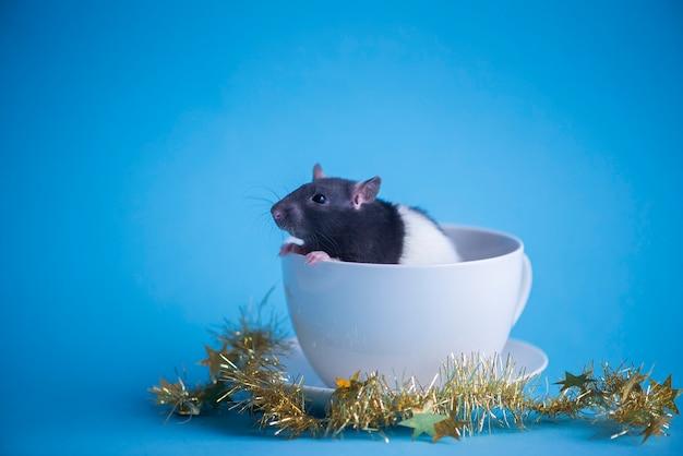 Śliczny domowy szczur w białej filiżance odizolowywającej na błękicie pojęcie nowy rok 2020.