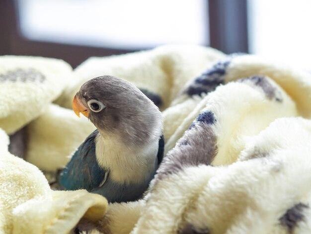 Śliczny dzieciak miłości ptak