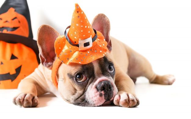 Śliczny francuski buldog z kapeluszowym halloween odizolowywającym