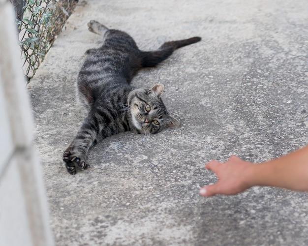 Śliczny i leniwy kot, który chce być głaskany przez kogoś na zewnątrz