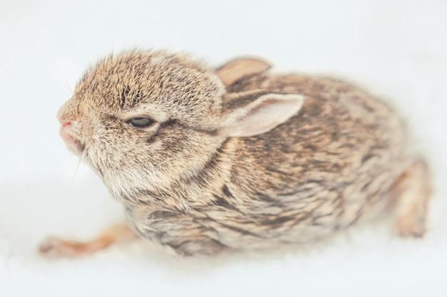 Śliczny i puszysty króliczek