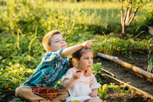 Śliczny i szczęśliwy młodszy brat i siostra w wieku przedszkolnym zbierają i jedzą dojrzałe truskawki w ogrodzie w słoneczny letni dzień.