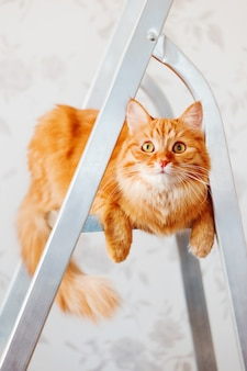Śliczny imbirowy kot siedzi na drabinie