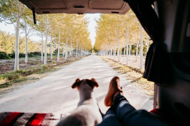 Śliczny jack russell pies i kobieta iść na piechotę relaksować w samochodzie dostawczym. koncepcja podróży. selektywna koncentracja na drzewach
