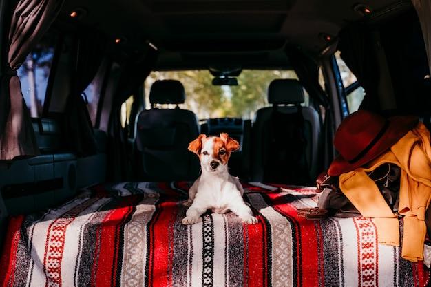 Śliczny jack russell pies relaksuje w samochodzie dostawczym. koncepcja podróży