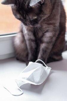 Śliczny kot bawić się z medyczną maską
