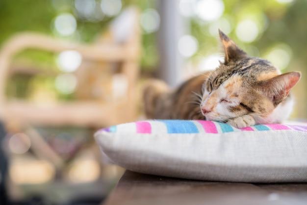 Śliczny kot calico śpi na poduszce