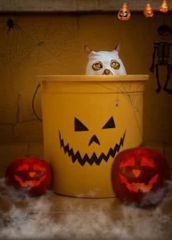 Śliczny kot domowy w domu w stroju ducha. halloweenowa dekoracja.