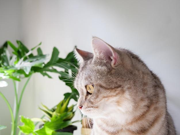 Śliczny kot i drzewo oczyszczające powietrze monstera, sansevieria w salonie