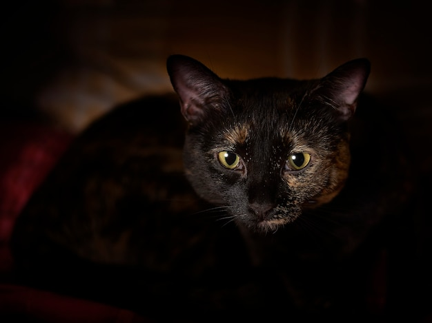 Śliczny kot w ciemności