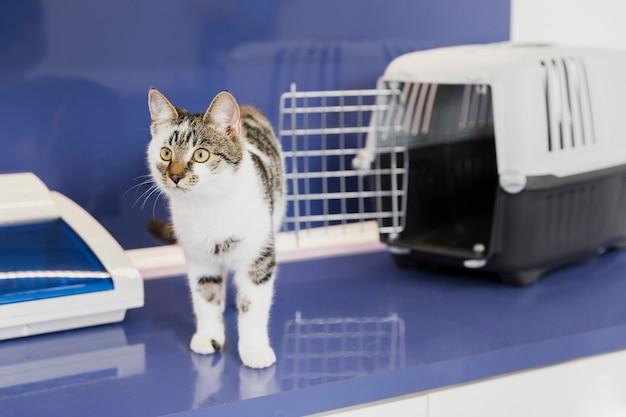 Śliczny kot z klatką w klinice weterynaryjnej