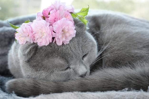 Śliczny kot z wieńcem leżący w domu, zbliżenie