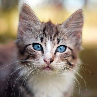 Śliczny kotek, mały kot o niebieskich oczach