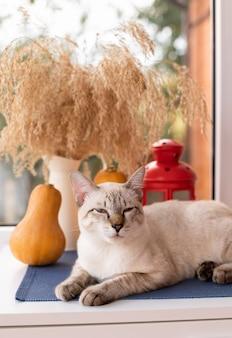 Śliczny kotek relaksuje się na parapecie z jesiennymi dekoracjami jesienna sezonowa kompozycja