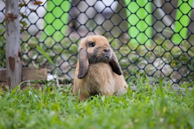 Śliczny królik bawiący się na łące zielonej trawie. przyjaźń z króliczkiem wielkanocnym. szczęśliwy królik.