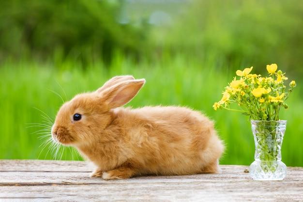 Śliczny królik imbirowy z bukietem żółtych kwiatów na zielonym tle przyrody
