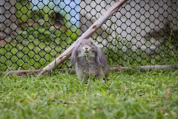 Śliczny królik je świeżość trawy na łące. przyjaźń z króliczkiem wielkanocnym. szczęśliwy królik