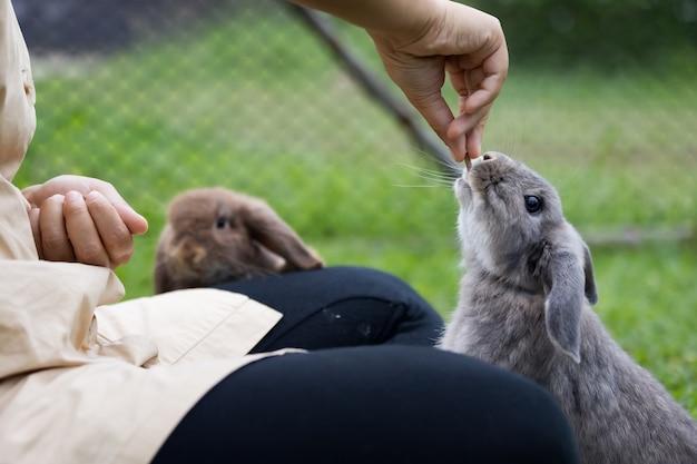 Śliczny królik jedzący pokarm w granulkach z ręki właściciela kobiety. głodny królik jedzenie na łące. właścicielka karmi swoje króliki pokarmem. przyjaźń z króliczkiem wielkanocnym.