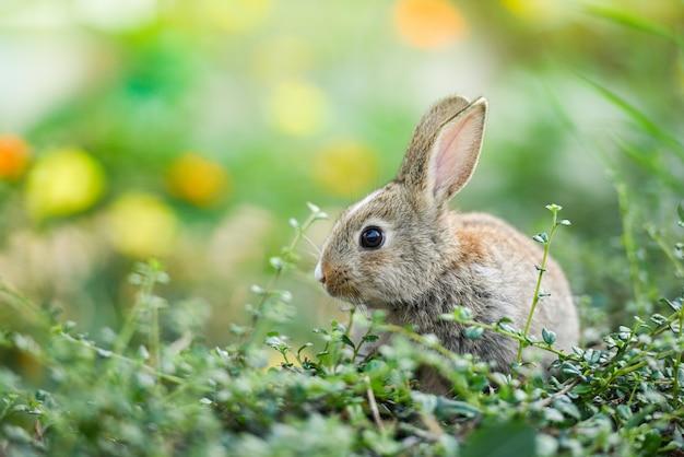 Śliczny królik siedzi na zielonej łące wiosną pola
