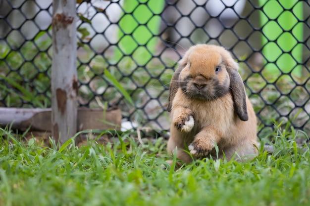 Śliczny królik skaczący i bawiący się na łące zielonej trawie. przyjaźń z króliczkiem wielkanocnym. szczęśliwy królik.