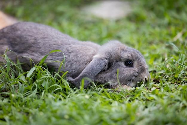 Śliczny królik w pozycji leżącej i spać na zielonej trawie na łące. przyjaźń z króliczkiem wielkanocnym. szczęśliwy królik.